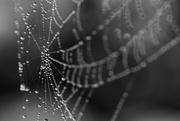 8th Jun 2021 - morning dew