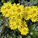 2021-06-20 Yellow Yellow