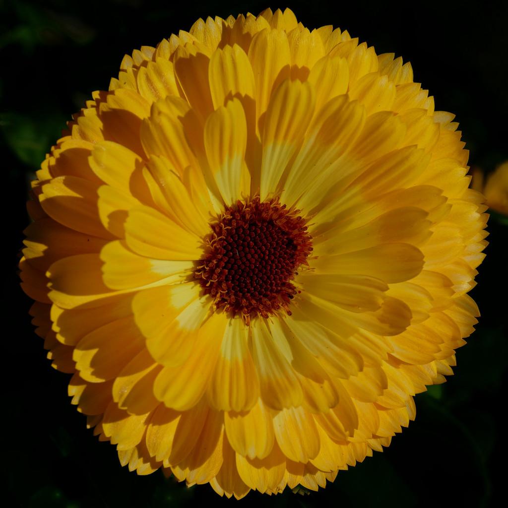 0616- Yellow Flower by bob65