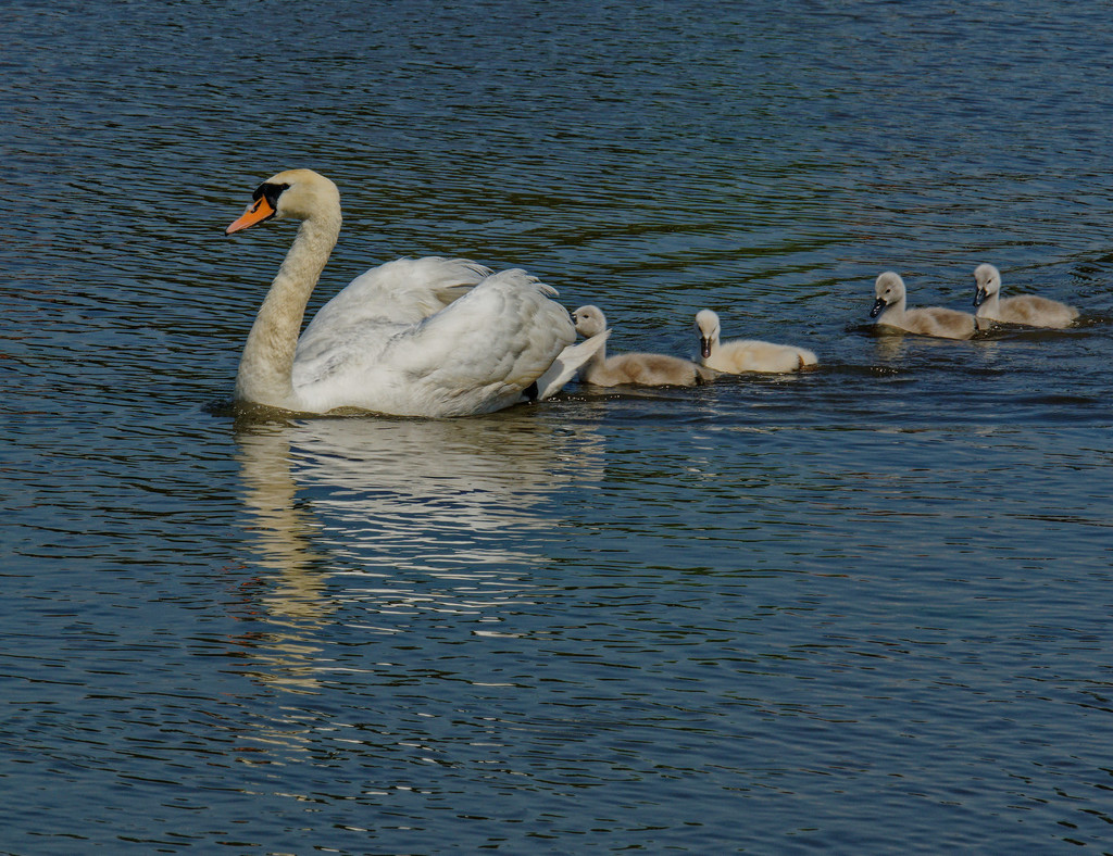 0617 - Family outing by bob65