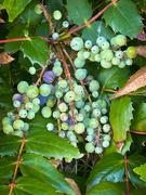19th Jun 2021 - ~Berries~