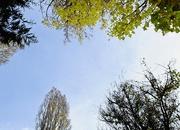 16th Jun 2021 - Tree tops