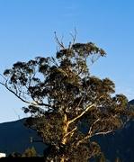 18th Jun 2021 - Treetop herons