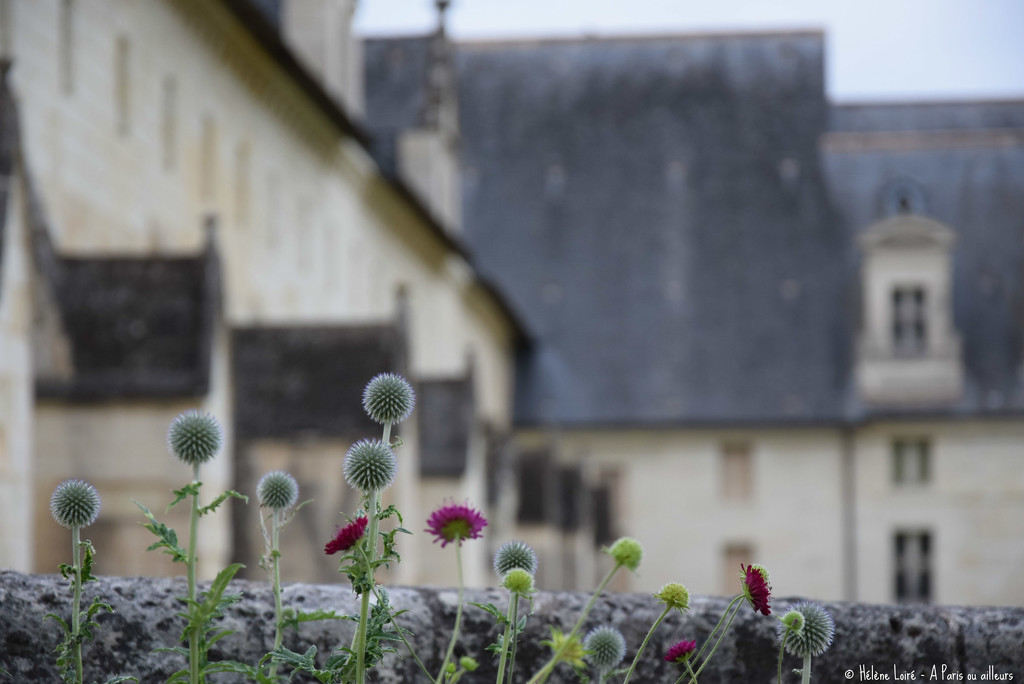 Abbaye de Fontevraud  by parisouailleurs