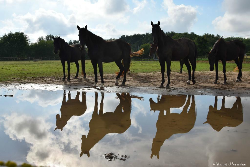 reflected by parisouailleurs