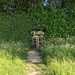 Through The Hedge