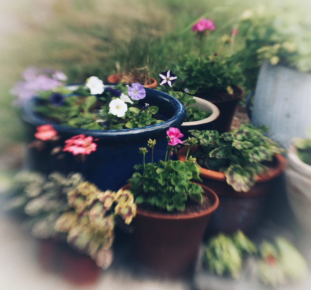 Pots and Plants by motherjane