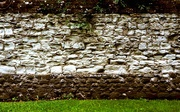 21st Jun 2021 - Garden wall 3