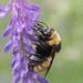 Sipping Nectar by fayefaye