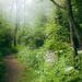 Walking through the fog  by cashep19