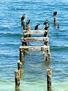 21st Jun 2021 - Cormorants