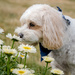 172 365 Taking Time to Smell the Daisies by dboelter