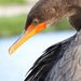 Cormorant looking back   by dutchothotmailcom