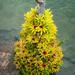 Bromeliad Tree