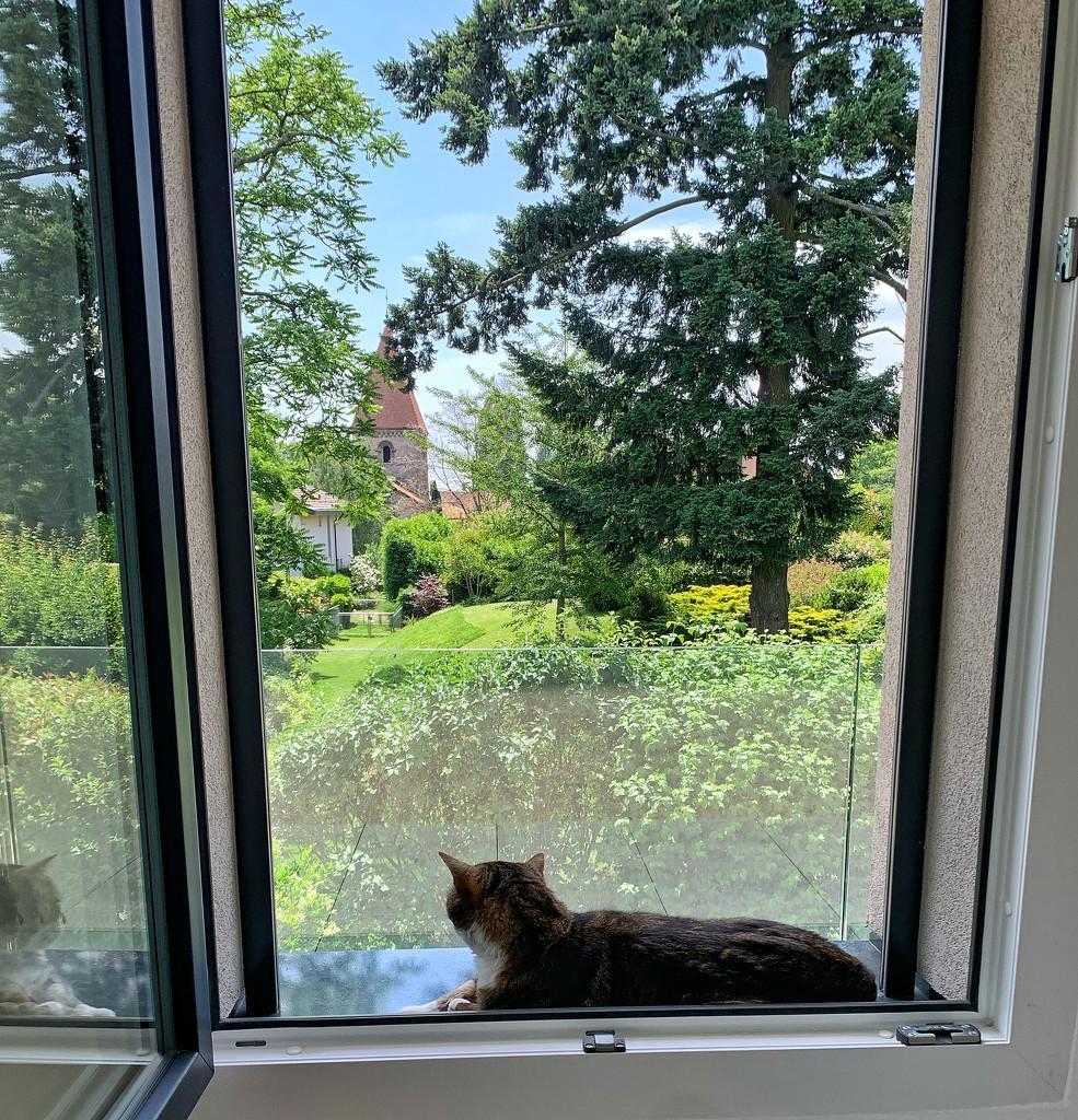 Zébulon at the windows.  by cocobella