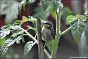 22nd Jun 2021 - What a sweet little bird