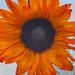 Farmer's Market flower by shutterbug49