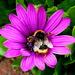 Pollination by gaf005