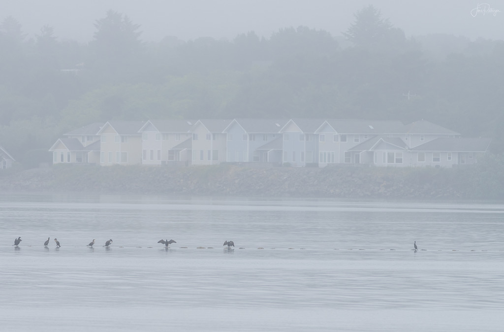 All In A Line In the Fog  by jgpittenger