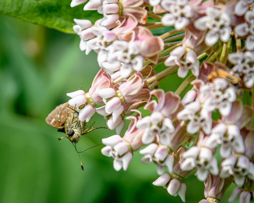 The Pollinator by marylandgirl58