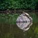 Big Turtle, Little Turtle Sunning on a Rock