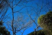 19th Jun 2021 - Trees of winter
