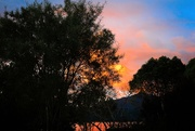 21st Jun 2021 - Sunlit trees