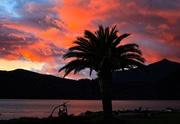 22nd Jun 2021 - Sunset palm