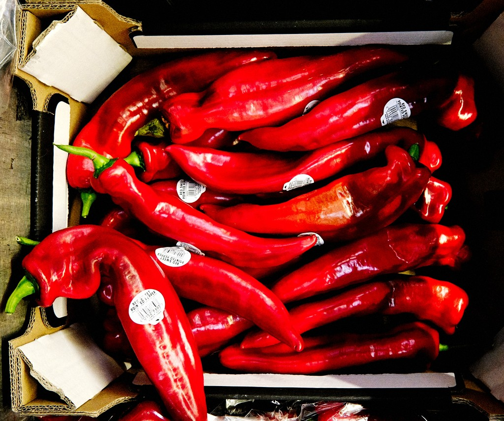 Red Peppers by allsop