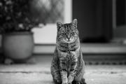 23rd Jun 2021 - Cat on a  doorstep