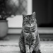 Cat on a  doorstep by brigette