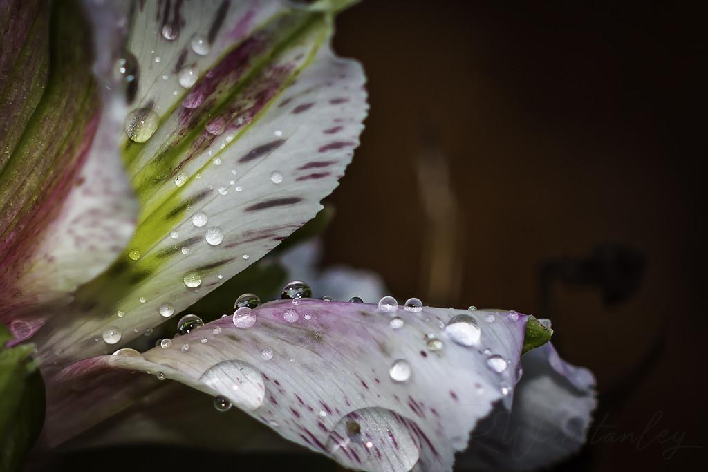 Raindrops by kipper1951