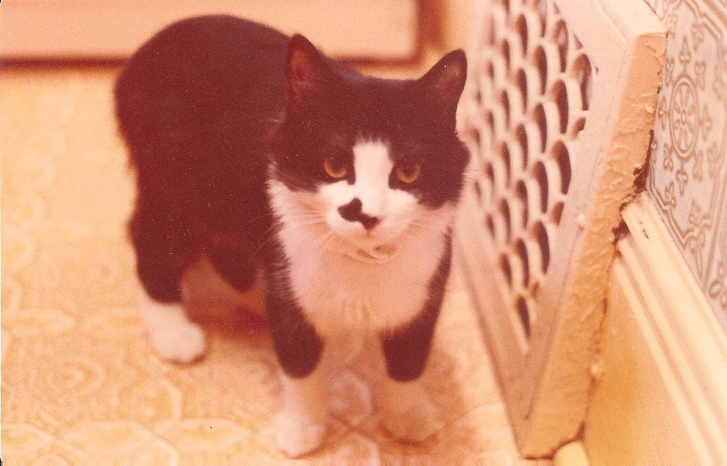 Young #6: Kitten by spanishliz