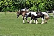 23rd Jun 2021 - Rescued horses
