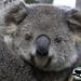 moments of magic by koalagardens