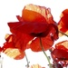 Arty Poppies by carole_sandford