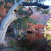 Day 7: Ormiston Gorge - The Ghost of the Gorge