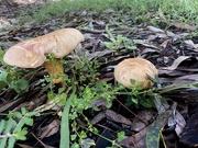 26th Jun 2021 - Mushrooms
