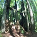 Redwood Princess  by pandorasecho