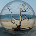 Favourite Tree in a Ball by onewing