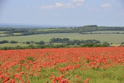24th Jun 2021 - A field with a view