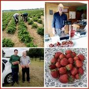 24th Jun 2021 - PYO Strawberries
