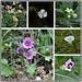 Wood Lane flowers