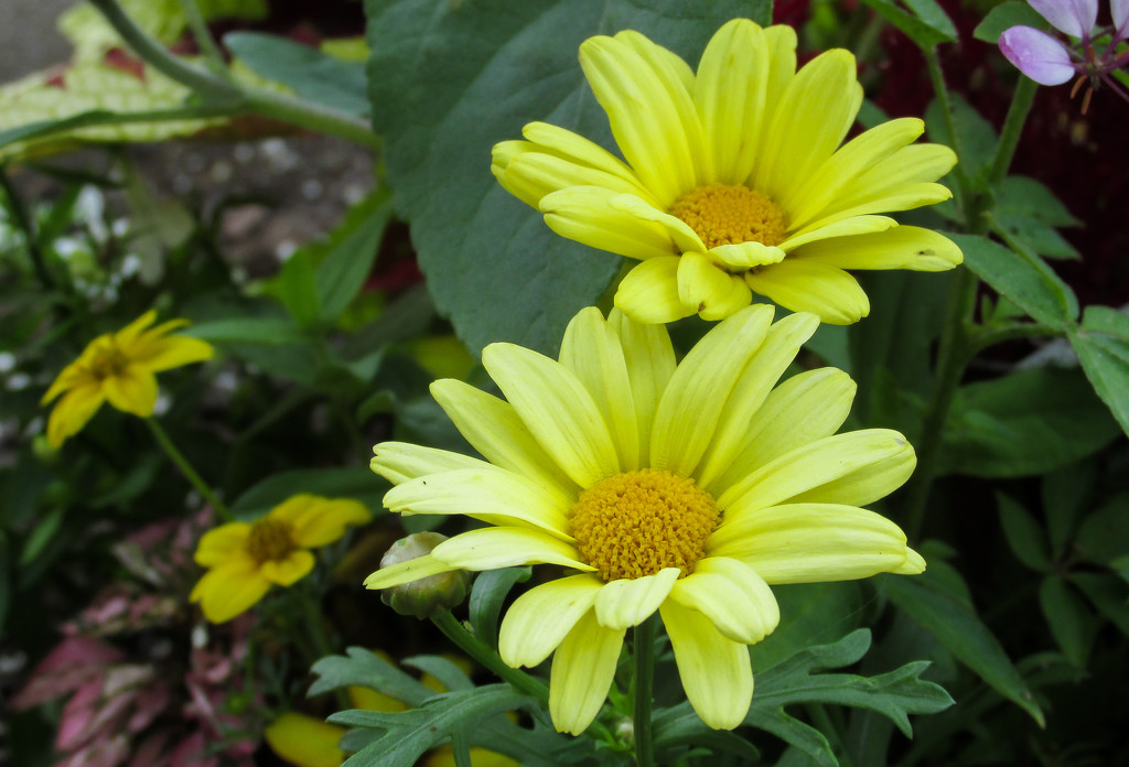Yellow flowers by mittens
