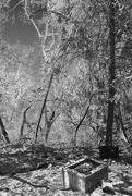 24th Jun 2021 - Bog Spring