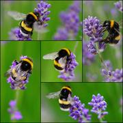 25th Jun 2021 - bee happy