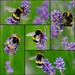 bee happy by quietpurplehaze