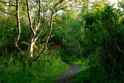 25th Jun 2021 - Swinister Walk