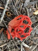 28th Jun 2021 - Fungi