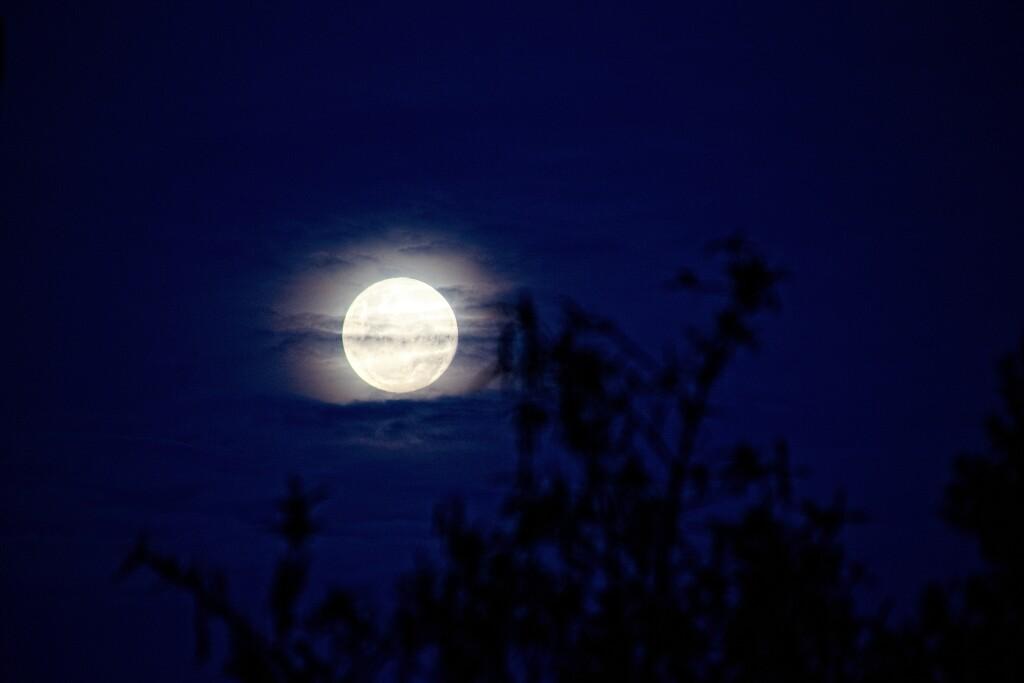 Silvery moon rising through the trees by kiwinanna